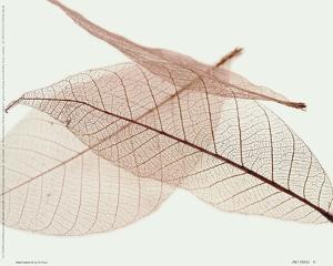 Sheer Leaves IV