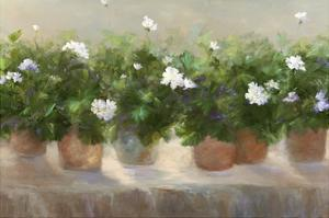White Geraniums by Sheila Finch