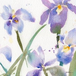 Irises by Sheila Golden