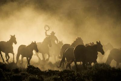 A wrangler herding horses through backlit dust cloud in golden light of sunrise by Sheila Haddad