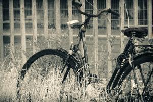 Abandoned Vintage Bicycle by Sheila Haddad