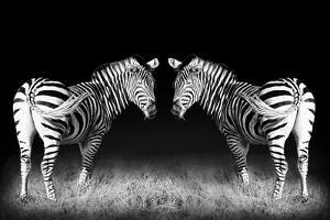 Black and White Mirrored Zebras by Sheila Haddad