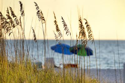 Day at the Beach Is Seen Through the Sea Oats Off the West Coast of Florida