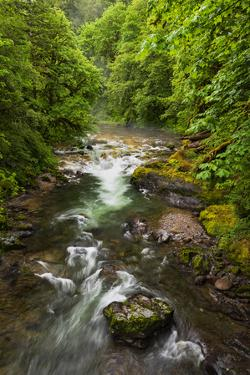 Flowing stream meandering through forest by Sheila Haddad