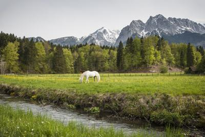 Grazing Horse in Pasture in Bavarian Alps with Snow by Sheila Haddad