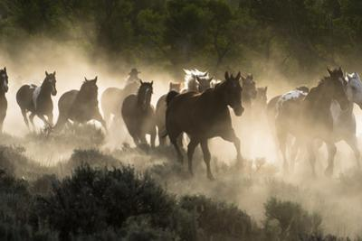 Horses being herded by a wrangler, backlit at sunrise by Sheila Haddad