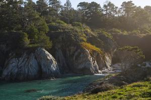 Morning sun filtering in through trees to a cove in Pt Lobos, California by Sheila Haddad