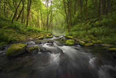 Peaceful river flowing through a forest by Sheila Haddad