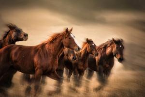 Running Horses, Blur and Flying Manes by Sheila Haddad