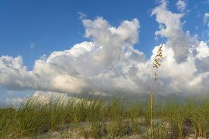 Sea grass and oats frame the dramatic cloudy sky by Sheila Haddad