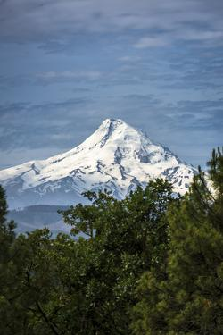 Snowcapped Mt. Jefferson framed by trees in the foreground by Sheila Haddad