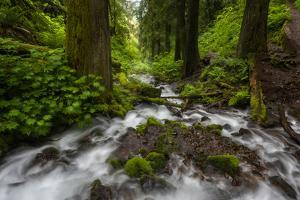 Soft moving stream through a canyon of forest by Sheila Haddad