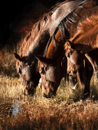 Three Horses Drinking in Dusky Light by Sheila Haddad