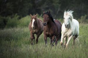 Three horses running through a green grassy field by Sheila Haddad