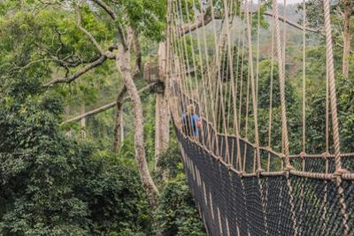Traversing the 7 bridges high in the canopy of Kakum National Forest by Sheila Haddad