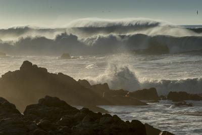 Waves Crashing on Rocks at Sunset, Asilomar State Beach, California by Sheila Haddad