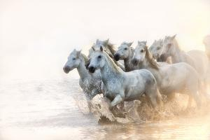 White Horses of Camargue Running in the Mediterranean Water at Sunrise by Sheila Haddad