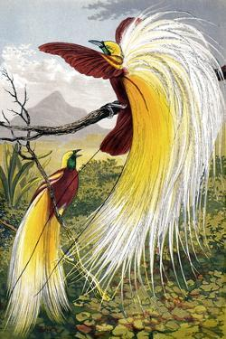 Birds of Paradise by Sheila Terry