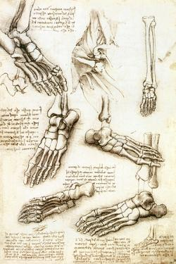 Foot Anatomy by Leonardo Da Vinci by Sheila Terry