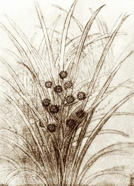 Leonardo Da Vinci's Rushes In Flower by Sheila Terry