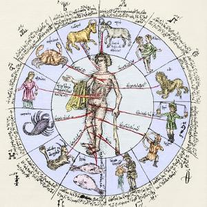 Medical Zodiac, 15th Century Diagram by Sheila Terry