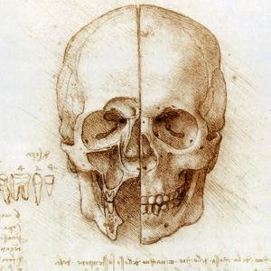 Skull Anatomy by Leonardo Da Vinci by Sheila Terry
