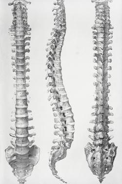 Spine Anatomy by Sheila Terry