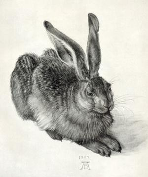 Young Hare, by Durer by Sheila Terry