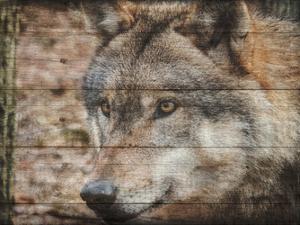 Alfa Wolf 2 by Sheldon Lewis