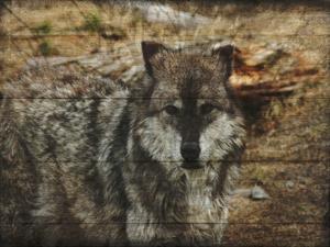 Alfa Wolf by Sheldon Lewis
