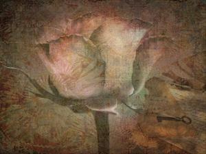 Rose Faith by Sheldon Lewis