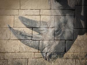 Stone Wall Rhino by Sheldon Lewis
