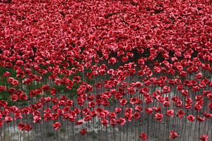 Blood Swept Lands and Seas of Red, Tower of London, 2014 by Sheldon Marshall