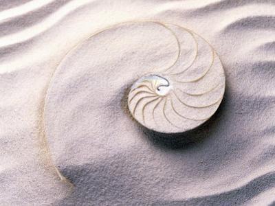 Shell Spiraling into Wavy Sand Pattern
