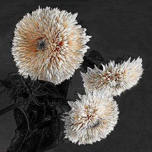 Sunflowers II by Shelley Lake