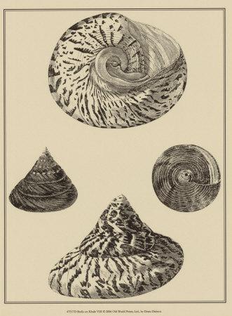 https://imgc.allpostersimages.com/img/posters/shells-on-khaki-viii_u-L-F18GZ80.jpg?artPerspective=n