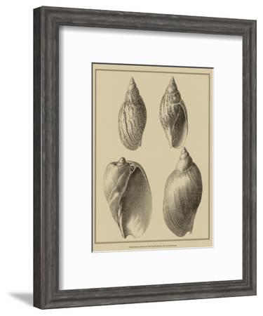 Shells on Khaki XI-Denis Diderot-Framed Art Print