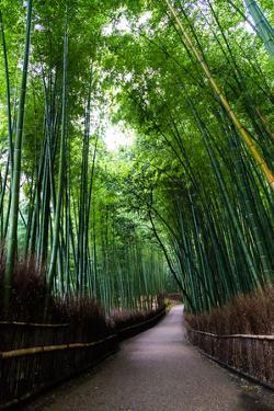 Sagano Bamboo Forest by Shenghung Lin Photos