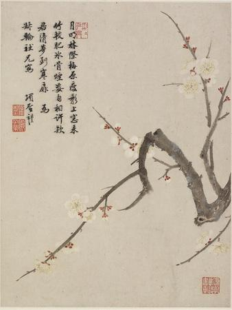 Blossoming Plum from a Flower Album of Ten Leaves, 1656