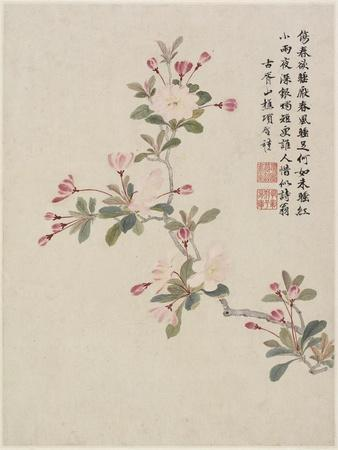 Crab-Apple Blossom from a Flower Album of Ten Leaves, 1656