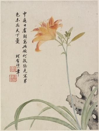 Day-Lily from a Flower Album of Ten Leaves, 1656