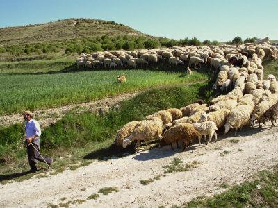 https://imgc.allpostersimages.com/img/posters/shepherd-and-his-flock-near-itero-de-la-vega-palencia-castilla-y-leon-spain-europe_u-L-P7NI5C0.jpg?p=0