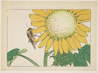 Grasshopper and Sunflower, C. 1877