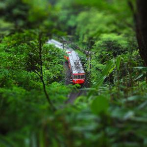 Train through the Woods by ShigeruTanida