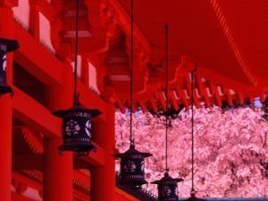 Heian Shrine in Spring, Shinto, Kyoto, Japan by Shin Terada