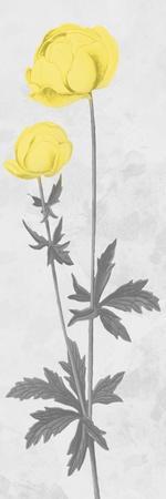 https://imgc.allpostersimages.com/img/posters/shinning-bloom_u-L-Q1H6XNB0.jpg?p=0