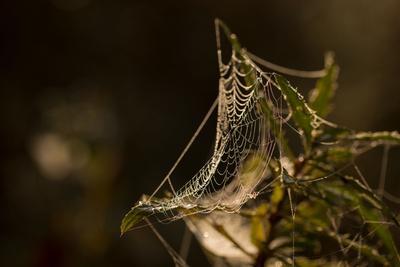 https://imgc.allpostersimages.com/img/posters/shiny-cobweb-on-dry-plant-nature-dark-background_u-L-Q1EXZL10.jpg?artPerspective=n