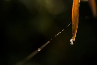 https://imgc.allpostersimages.com/img/posters/shiny-spider-web-on-reed-black-background_u-L-Q1EXX0Q0.jpg?artPerspective=n