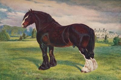 https://imgc.allpostersimages.com/img/posters/shire-horse-stallion-harold-c1905-c1910_u-L-Q1EFMNW0.jpg?artPerspective=n