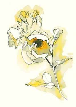 Carols Roses IV by Shirley Novak